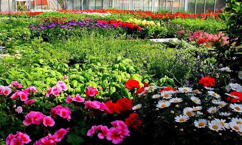Vrtnarija Urbanek